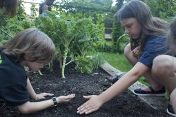 Madeleine Niewoehner and James Lallos-Harrell plant carrot seeds in the Longfellow School garden. Before the planting, garden members harvested beets. (DAVID PIERINI/Staff Photographer)
