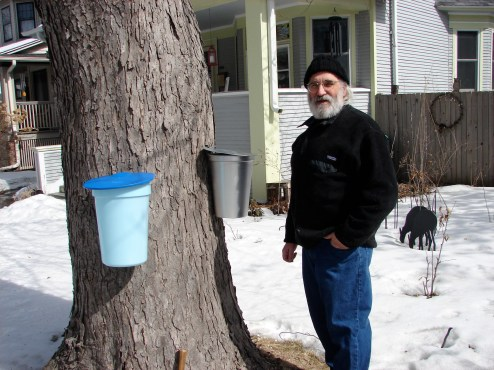 Jan Weinstein poses after tapping their Silver Maple in Oak Park.