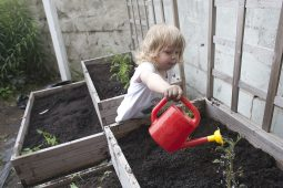 Camila Winter watering a plant in the raised-bed garden at the Day Nursery of Oak Park and River Forest in 2013. | FILE