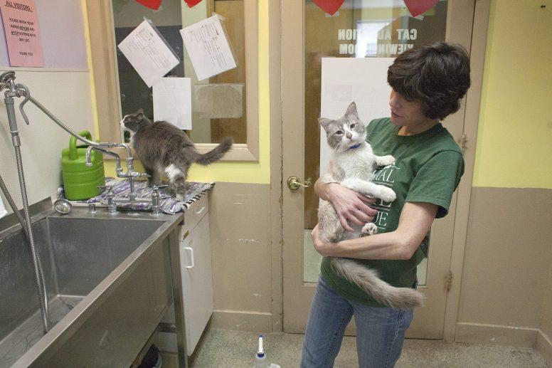 Jill Lebovitz gives love to Orpheus, one of the more affectionate cats in the Animal Care League cat room in 2013. | FILE