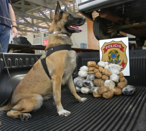 Apreensão da droga e traficante contou com ajuda de um cão farejador - Foto: divulgação