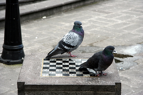 """""""Debater com petistas é como jogar xadrez com pombos — eles derrubam as peças, fazem cocô no tabuleiro e saem arrulhando vitória, com o peito estufado"""", diz o texto"""