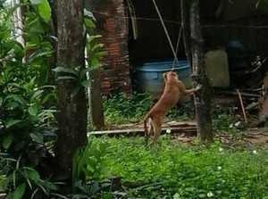 111015-policia-cachorrotorturado-cedida2