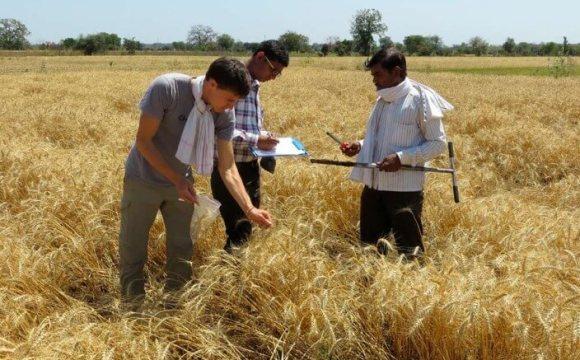 有機農業是發展中經濟體的永續性替代方案