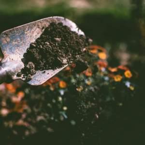 青蔥(Allium fistulosum L.)設施有機栽培肥培管理技術研究