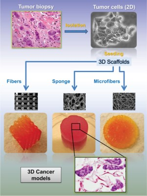 Cancer tissue engineering new perspectives in understanding the biology of solid tumours a