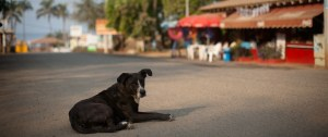 Troncones photos of dog on main street