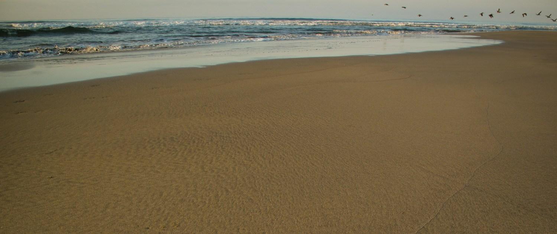 Birds fly over empty Troncones Beach