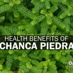 Health Benefits of Chanca Piedra