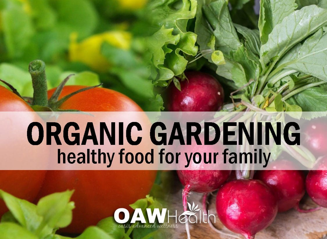 Organic Gardening – Healthy Food for Your Family