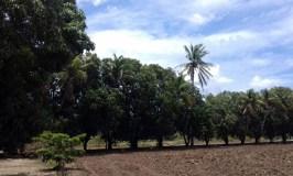 Lluvias beneficiarán al campo en Mixtequilla