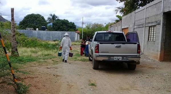 Atacan abejas a vecinos de Tehuantepec