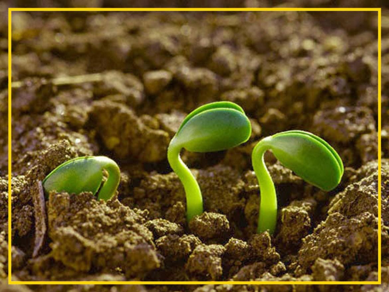 Em verdade, em verdade vos asseguro que se o grão de trigo não cair na terra e não morrer, permanecerá ele só; mas se morrer produzirá muito fruto. João 12:24