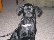 Oakland County Dog Training