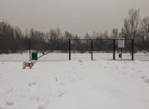 Wybieg dla psów na ul.Podmokłej w Krakowie