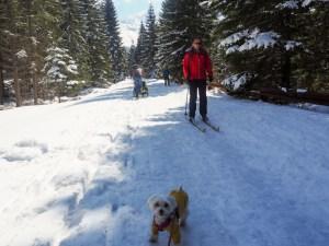 Uwaga na narciarzy.
