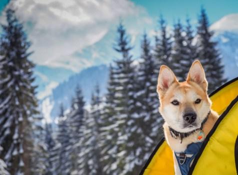 Pies na kołach – Dolina Rohacka, Tatry Słowackie.