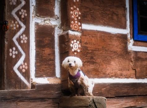 Bieszczady z psem – Skansen w Sanoku.