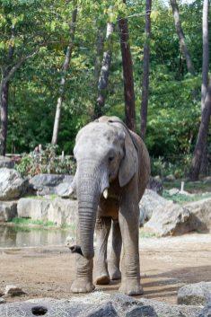 Zoo de la flèche objectif pays de loire56594_DxO