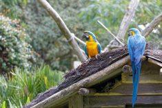 Zoo de la flèche objectif pays de loire56609_DxO