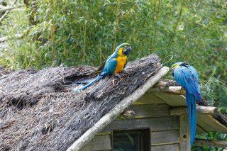 Zoo de la flèche objectif pays de loire56611_DxO