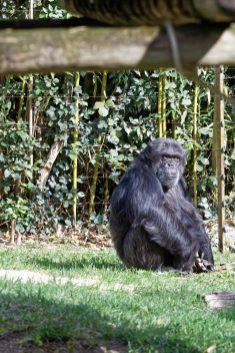 Zoo de la flèche objectif pays de loire56640_DxO