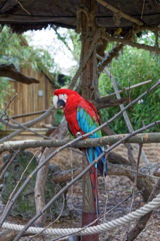 Zoo de la flèche objectif pays de loire56649_DxO