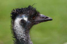 Zoo de la flèche objectif pays de loire56679_DxO