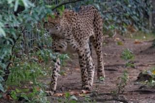 Zoo de la flèche objectif pays de loire56681_DxO