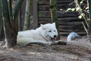 Zoo de la flèche objectif pays de loire56709_DxO