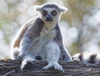 Zoo de la flèche objectif pays de loire56727_DxO