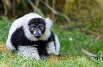 Zoo de la flèche objectif pays de loire56738_DxO