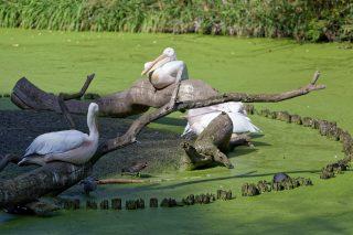 Zoo de la flèche objectif pays de loire56759_DxO