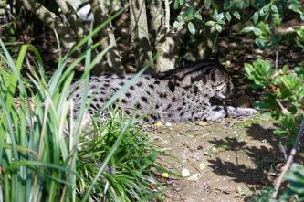 Zoo de la flèche objectif pays de loire56783_DxO