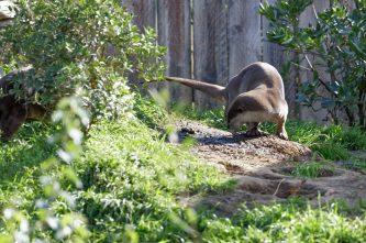 Zoo de la flèche objectif pays de loire56787_DxO