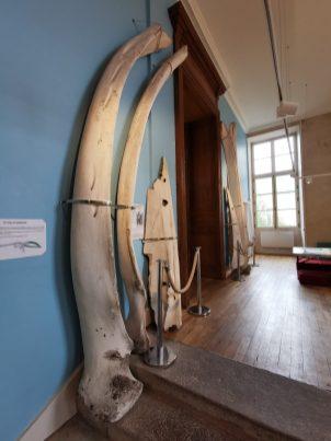museum des sciences naturelles Angers_154502