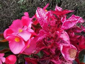 chateau et jardins de villandry_New Name_904da067-c2f7-4002-b18c-21801d7378d1