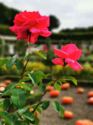 chateau et jardins de villandry_New Name_IMG_20190928_140742