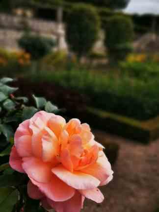 chateau et jardins de villandry_New Name_IMG_20190928_141227