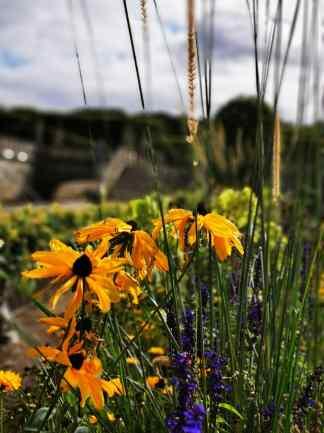 chateau et jardins de villandry_New Name_IMG_20190928_141348