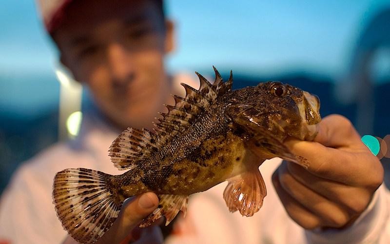 rascasse en rockfishing