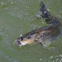 Pêche aux leurres : 5 erreurs à éviter ...