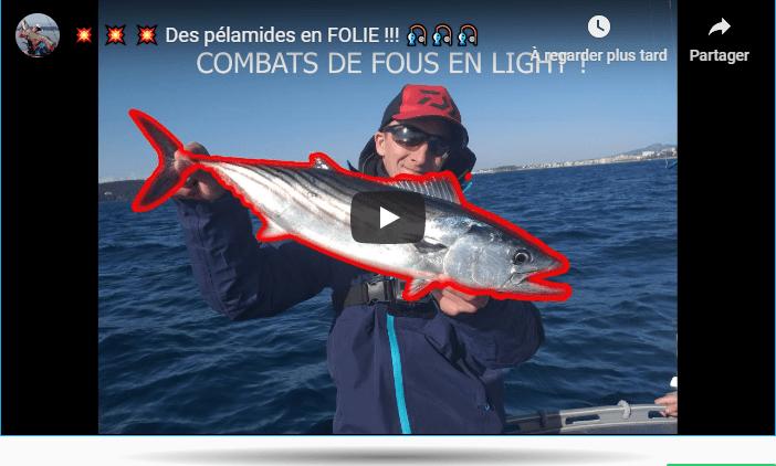pêche pélamide vidéo