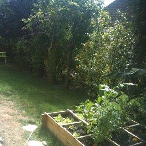 Mon jardin potager