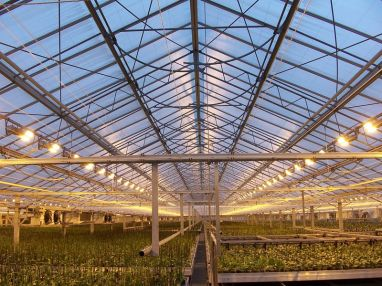 Greenhouse with rows of plants and lighting that can be checked with a luciscan
