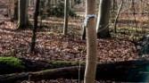 schicker Baum