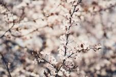 Obligatorisches Blütenbild