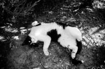 Türkische Entspannung mit Katze