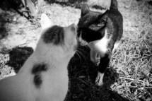 Türkisches Katzenküsschen