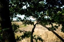 Durch den Baum